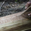 Thumbnail image for How to Make Ash Splints for Baskets